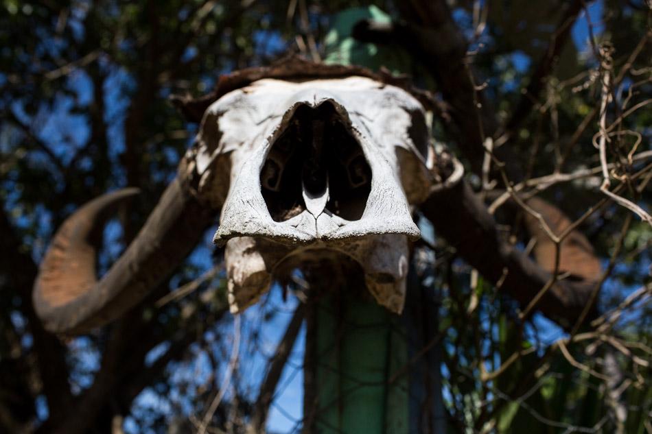 ensaio-fotografico-no-pantanal-ana-e-tiago-25