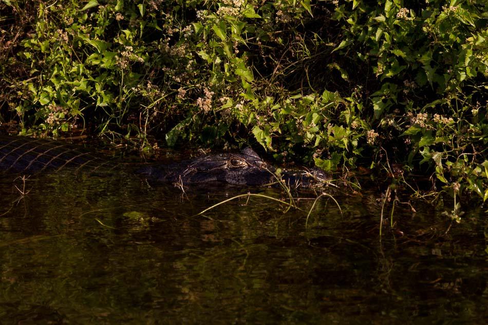 ensaio-fotografico-no-pantanal-ana-e-tiago-26