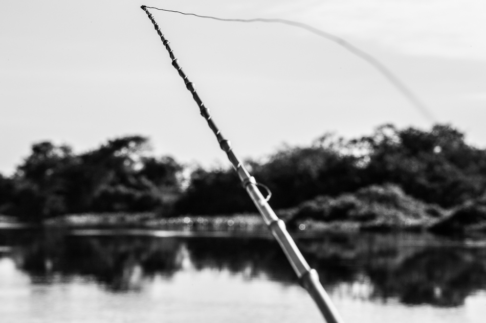 ensaio-fotografico-no-pantanal-ana-e-tiago-27
