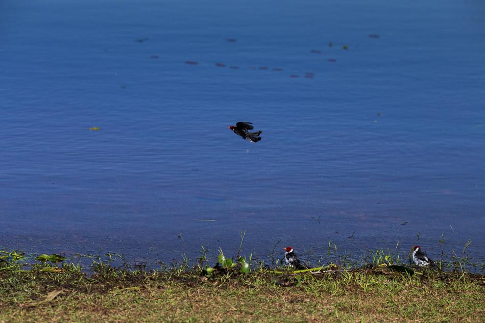 ensaio-fotografico-no-pantanal-ana-e-tiago-51
