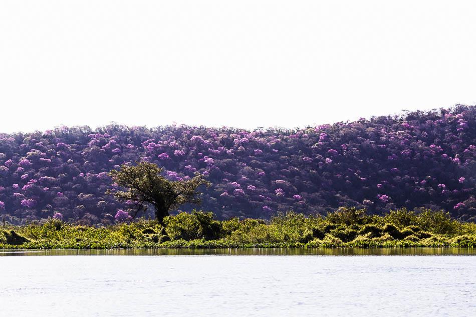 ensaio-fotografico-no-pantanal-ana-e-tiago-58