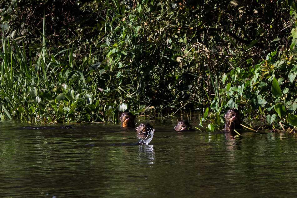 ensaio-fotografico-no-pantanal-ana-e-tiago-59