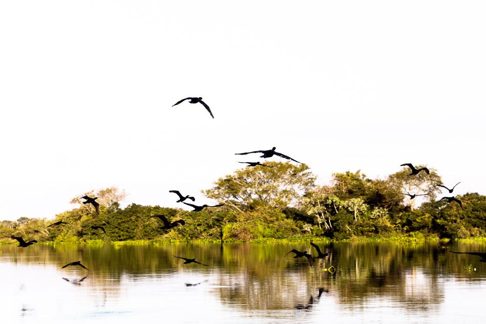 ensaio-fotografico-no-pantanal-ana-e-tiago-63