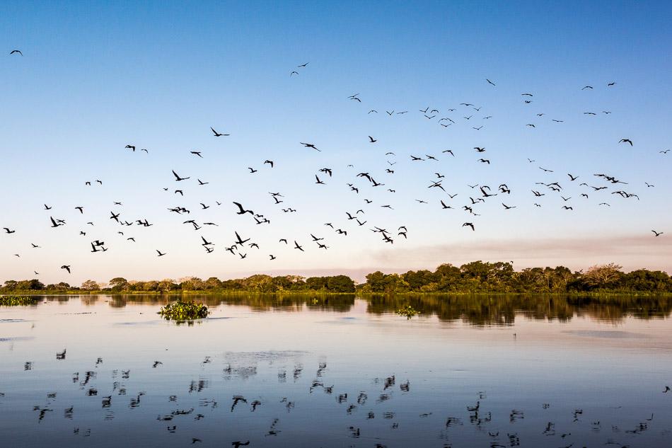 ensaio-fotografico-no-pantanal-ana-e-tiago-64