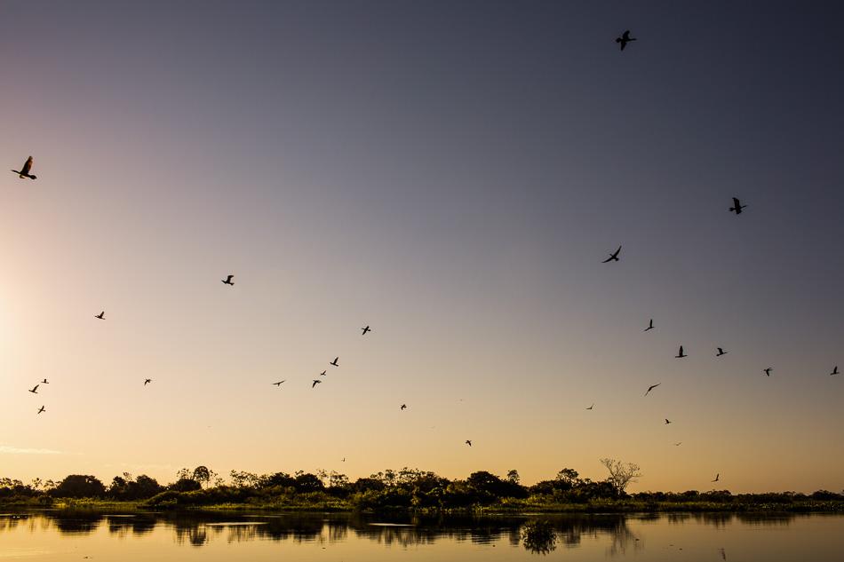 ensaio-fotografico-no-pantanal-ana-e-tiago-65