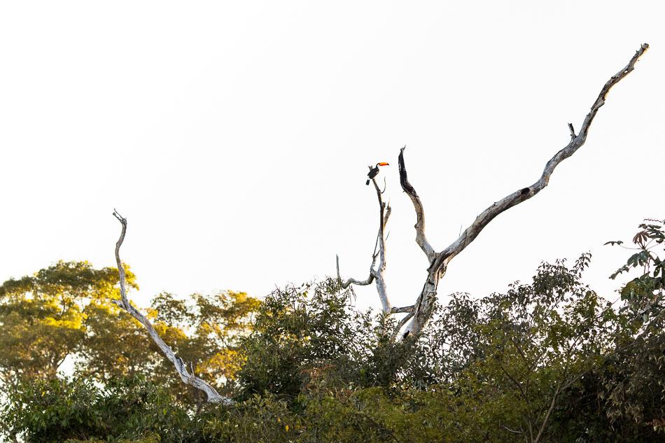 ensaio-fotografico-no-pantanal-ana-e-tiago-69